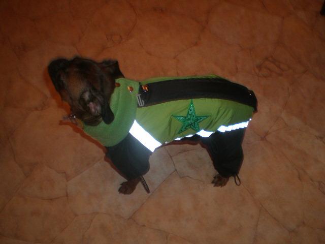 Для собак выкройки одежды для собак